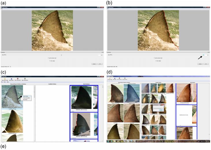 Нейромережу навчили розпізнавати акул по плавника