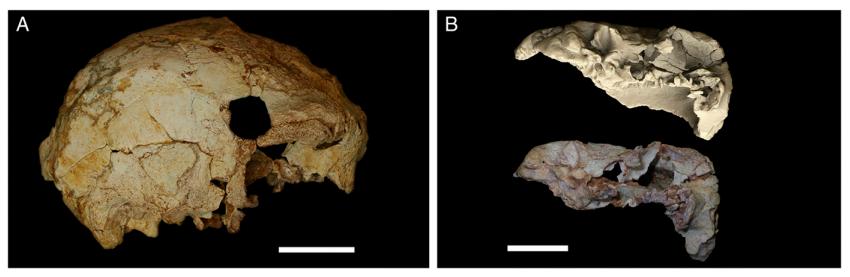 У Португалії знайшли найдавніший череп європейця