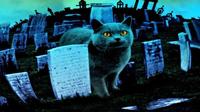Кладовище домашніх тварин