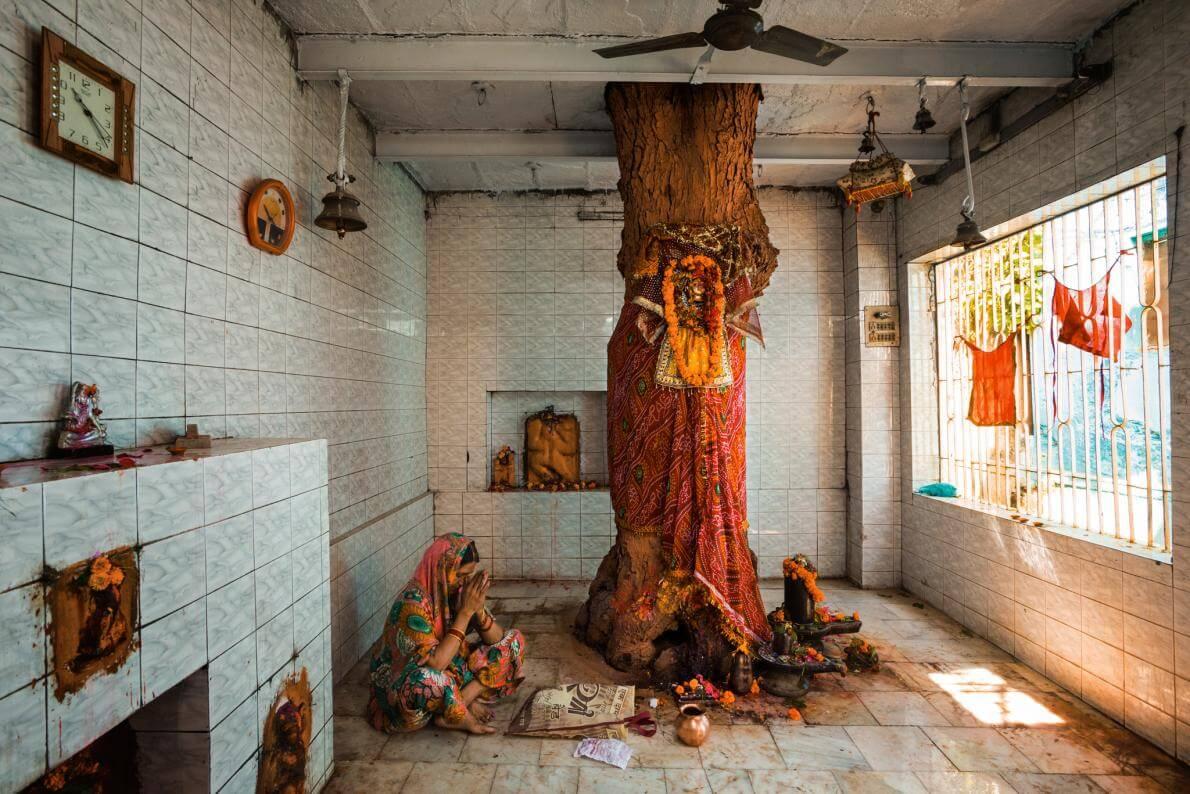 На півночі Індії дерево яке відоме як запобіжник усіх хвороб та прояв індуїстської богині Шітали.