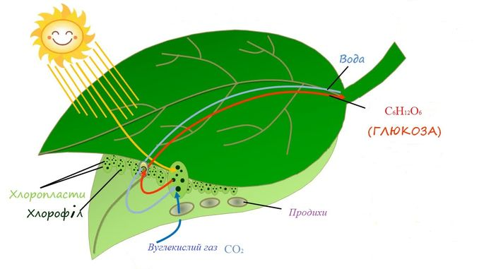 Виправлений недолік фотосинтезу призвело до підвищення врожайності на 40%