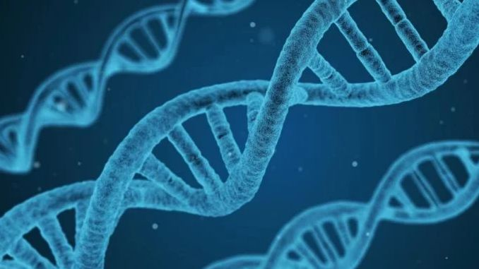 Перший створений комп'ютером геном може стати основою для синтетичного життя