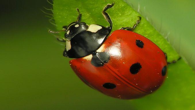 з лугів Німеччини зникло дві третини комах