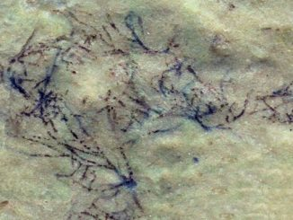 В Китаї знайшли зелену водорість
