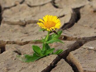 рослини виживають під час посухи