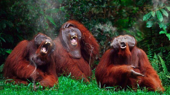 З'ясувалося, що набагато більше тварин вміє сміятися, ніж передбачалося