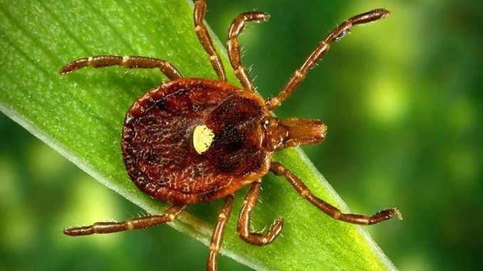 Що таке вірус YEZV і чи небезпечний він для людини